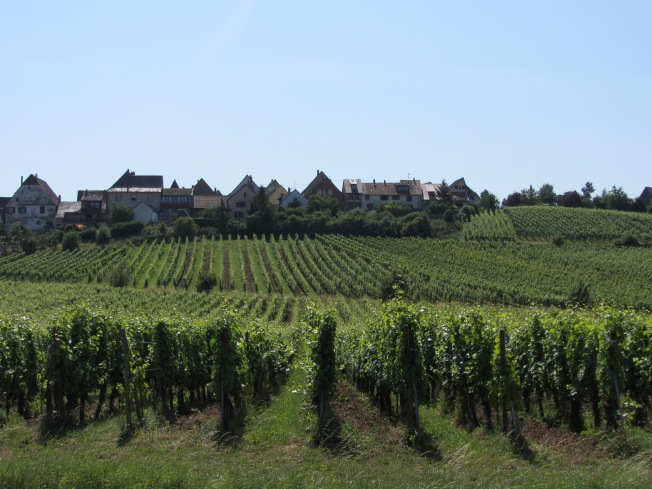 Hill vineyards in Alsace wine route