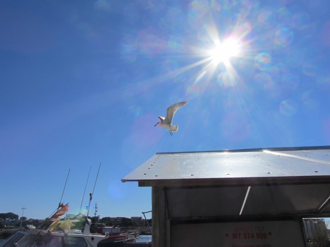 I just like this seagull hovering over the boats