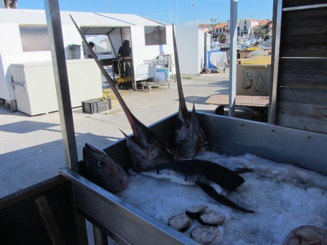 Strange sights at the fish market