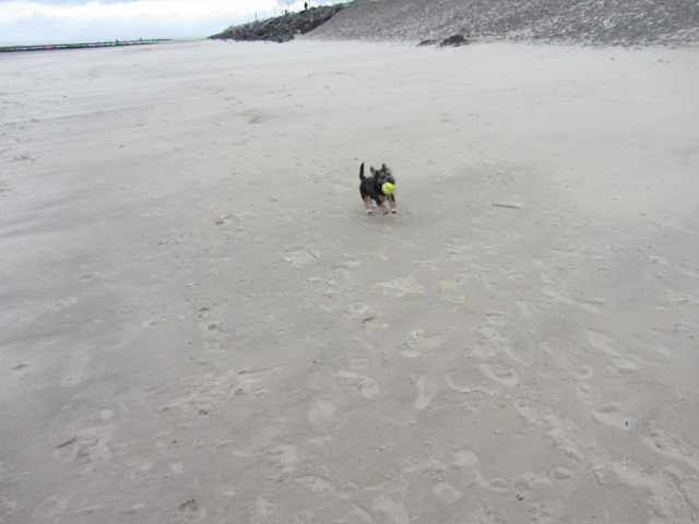 A great beach to chase a ball