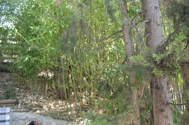 The tall bamboo providing shade and privacy