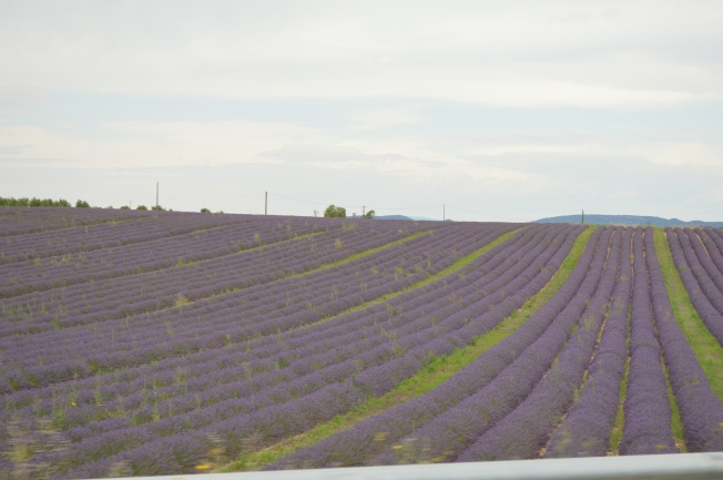 The breathtaking lavender fields