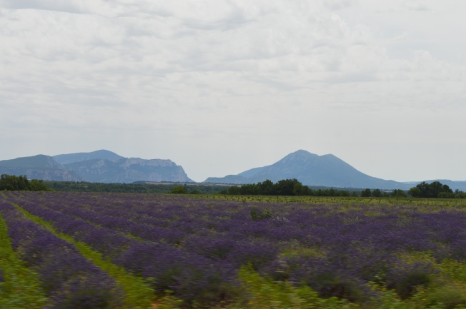 More lavender on our detour with beautiful backdrop of The Verdon National Park