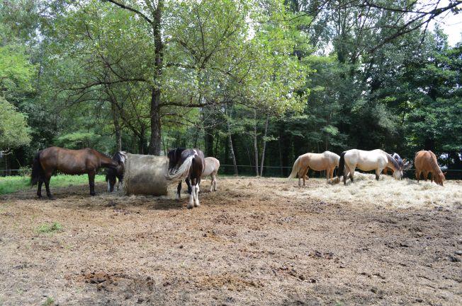 Dompierre-sur-Charente 14 022