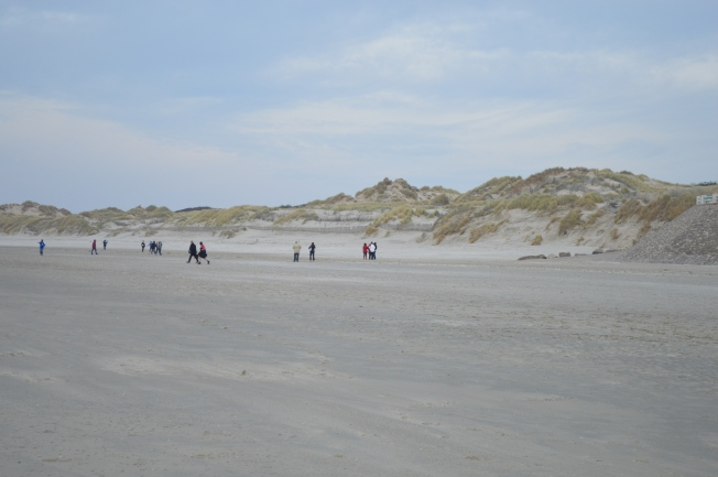 Sand dunes on Quend-Plage-les Pins