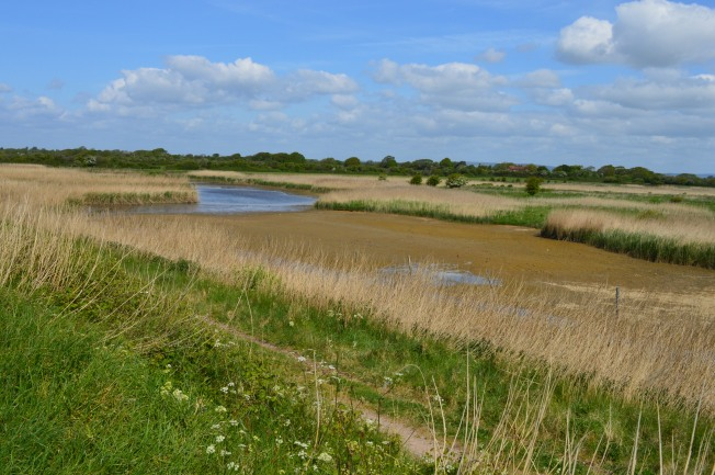 Pagham Harbour 005
