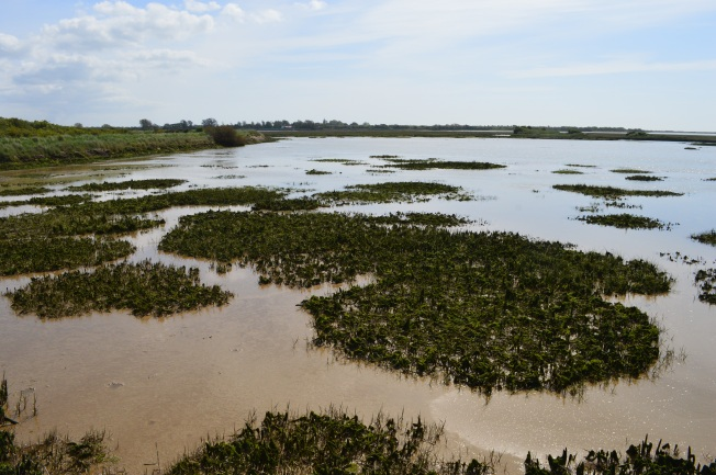 Pagham Harbour 024