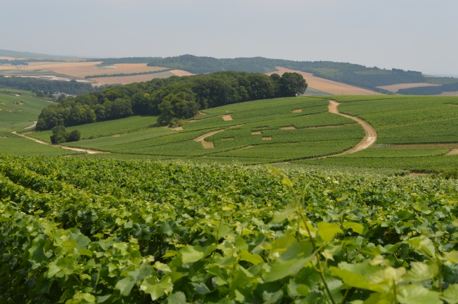 View of the Champagne fields from Manoir de Montflambert, Mutigny