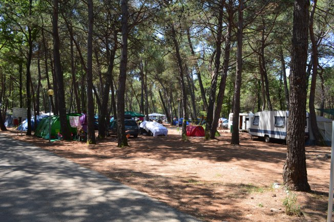 Plenty of shade all over the campsite