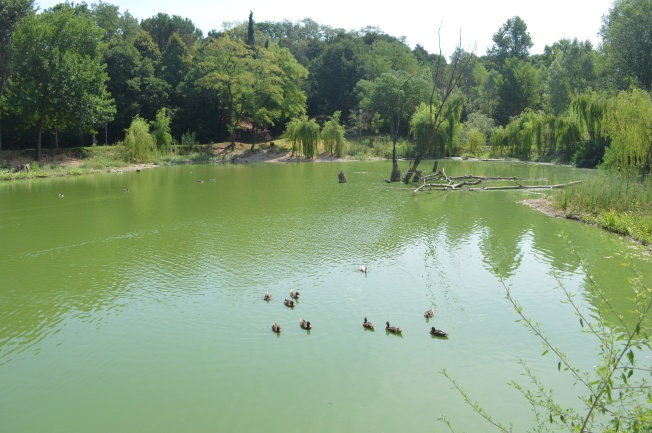 The calming pond and ducks at Monzambano's sosta