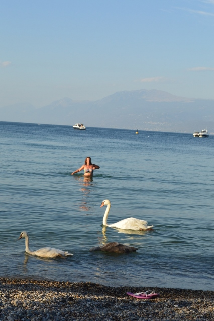 I even got to swim with swans!