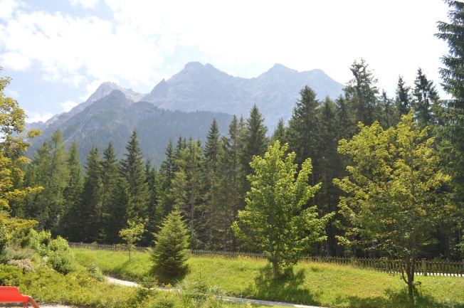 The inviting alpine forest surrounding the campsite