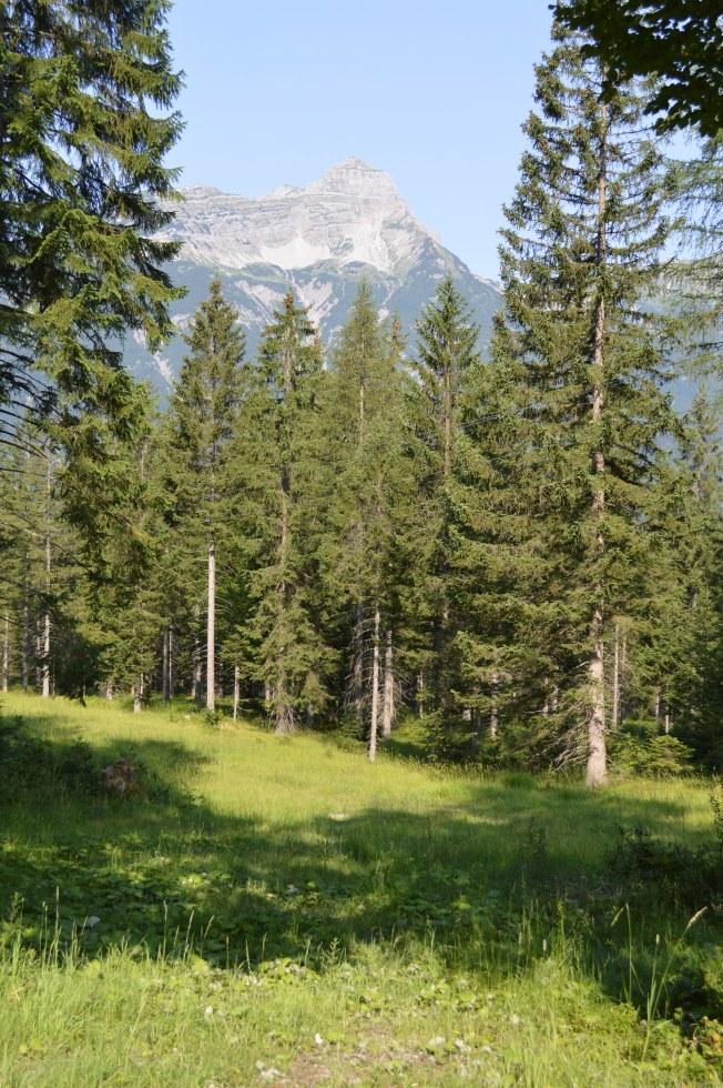 Beano's walk through the alpine forest