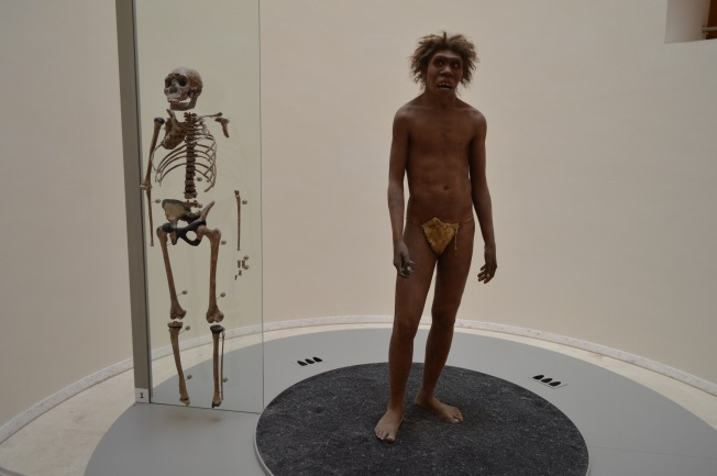 Lucy's Skeleton and the Lake Turkana Teenager, Homo Erectus